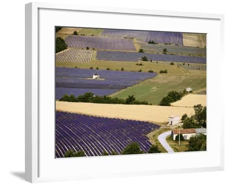 Aerial Lavender Field-David Barnes-Framed Art Print