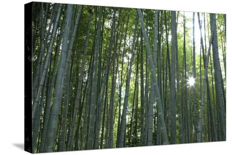Japan, Kyoto. Sunburst Inside the Arashiyama Bamboo Grove-Jaynes Gallery-Stretched Canvas Print