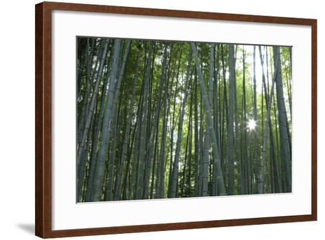 Japan, Kyoto. Sunburst Inside the Arashiyama Bamboo Grove-Jaynes Gallery-Framed Art Print