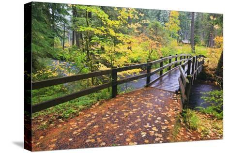 Fall Colors Add Beauty to South Trail at Silver Falls State Park, Oregon, USA-Craig Tuttle-Stretched Canvas Print