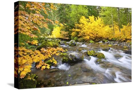 Fall Colors Along Santiam River, Willamette National Forest, Oregon Cascades, Pacific Northwest-Craig Tuttle-Stretched Canvas Print