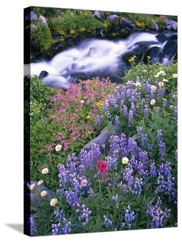 Wildflowers Blooming Along Rushing Creek-Craig Tuttle-Stretched Canvas Print