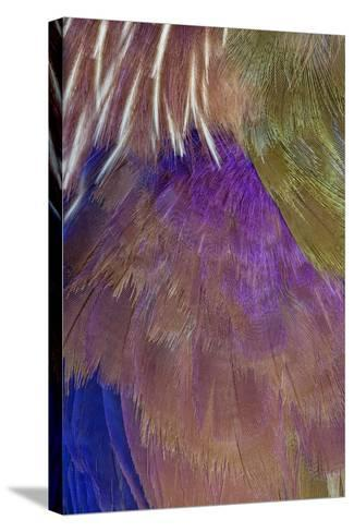 Neck and Chest Feather Pattern of Roufus-Crowed Roller-Darrell Gulin-Stretched Canvas Print