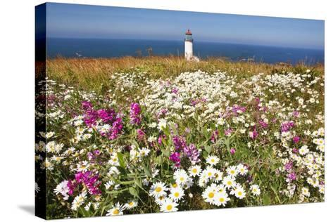 Wildflwers at North Head Lighthouse, Washington State, Pacific Ocean, Pacific Northwest-Craig Tuttle-Stretched Canvas Print