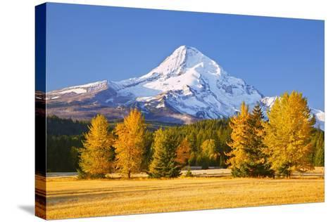 Sunrise over Mt. Hood and Fall Color Trees, Hood River, Oregon Cascades-Craig Tuttle-Stretched Canvas Print