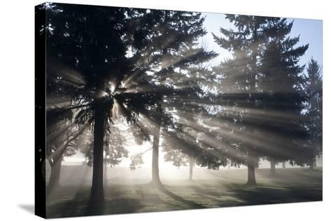 Sunrise Through Fog and Trees, Willamette Valley, Oregon-Craig Tuttle-Stretched Canvas Print