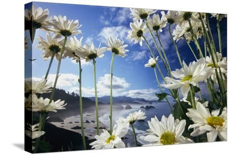 Wildflowers in Bloom Along Coastline-Craig Tuttle-Stretched Canvas Print