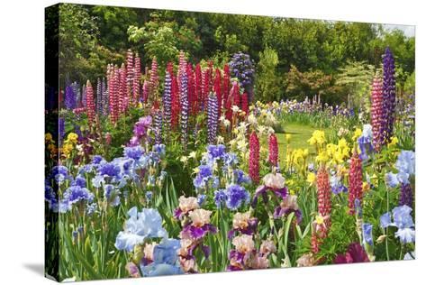 Schreiner Iris Gardens in Salem, Oregon-Craig Tuttle-Stretched Canvas Print