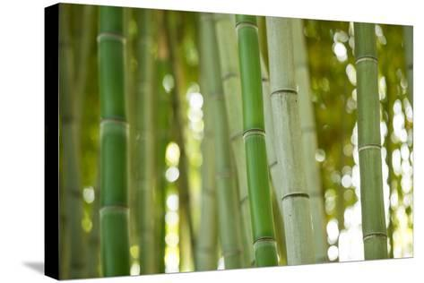Bamboo and Bokeh I-Erin Berzel-Stretched Canvas Print