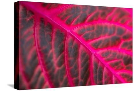 Pink Leaf II-Erin Berzel-Stretched Canvas Print