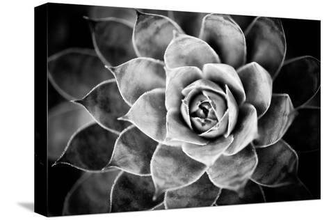 Monochrome Succulent V-Erin Berzel-Stretched Canvas Print