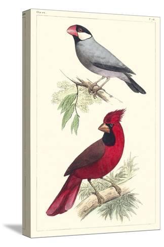 Lemaire Birds I-C.L. Lemaire-Stretched Canvas Print