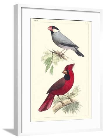 Lemaire Birds I-C.L. Lemaire-Framed Art Print