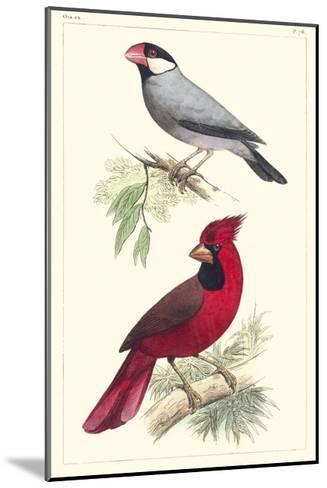 Lemaire Birds I-C.L. Lemaire-Mounted Art Print