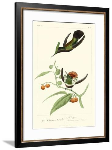 Lemaire Hummingbirds III-C.L. Lemaire-Framed Art Print