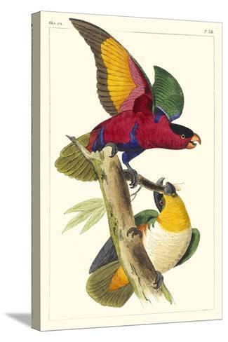 Lemaire Parrots I-C.L. Lemaire-Stretched Canvas Print