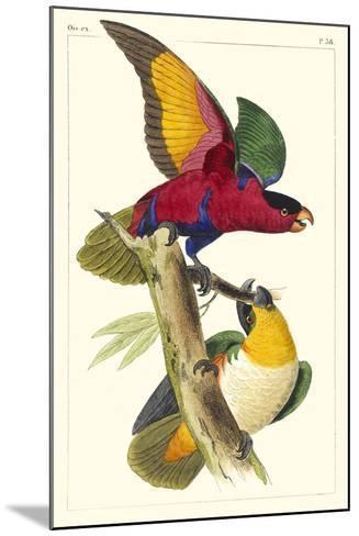 Lemaire Parrots I-C.L. Lemaire-Mounted Art Print