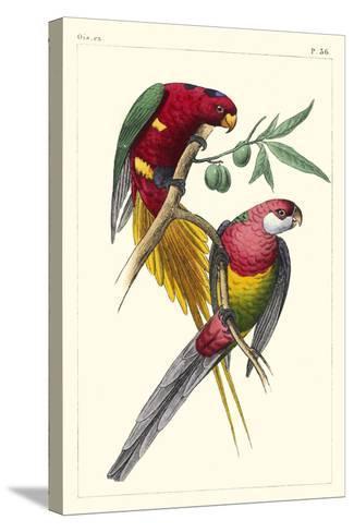 Lemaire Parrots III-C.L. Lemaire-Stretched Canvas Print