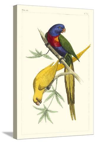 Lemaire Parrots IV-C.L. Lemaire-Stretched Canvas Print