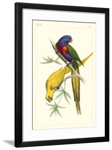 Lemaire Parrots IV-C.L. Lemaire-Framed Art Print