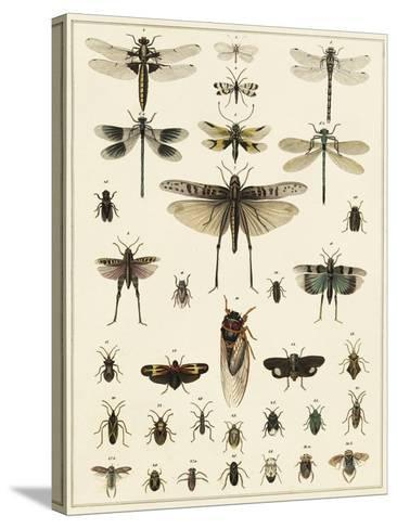 Dragonfly Display-Oken-Stretched Canvas Print