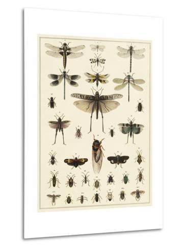 Dragonfly Display-Oken-Metal Print