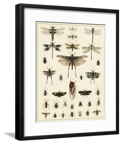 Dragonfly Display-Oken-Framed Art Print