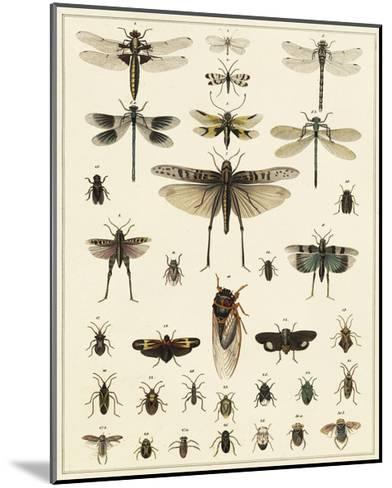 Dragonfly Display-Oken-Mounted Art Print