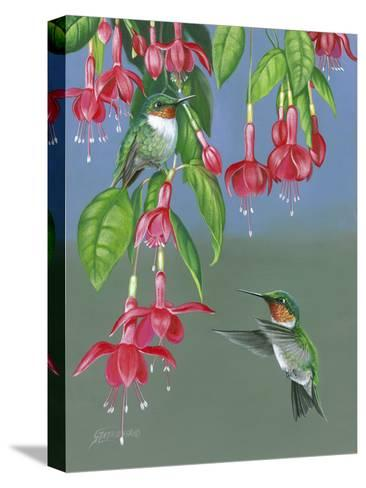 Hummers and Fuchsia-Fred Szatkowski-Stretched Canvas Print