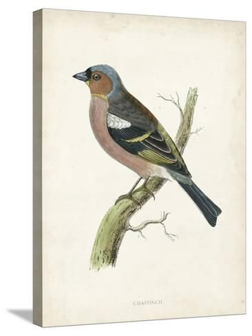 Morris Chaffinch-Reverend Francis O^ Morris-Stretched Canvas Print