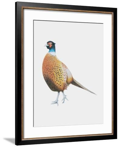 Pheasant, 2012-Ele Grafton-Framed Art Print