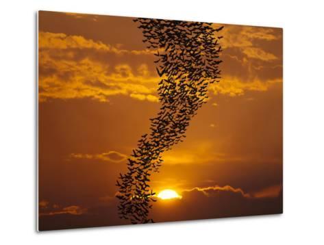Bats Flying Againt Sun-Exsodus-Metal Print