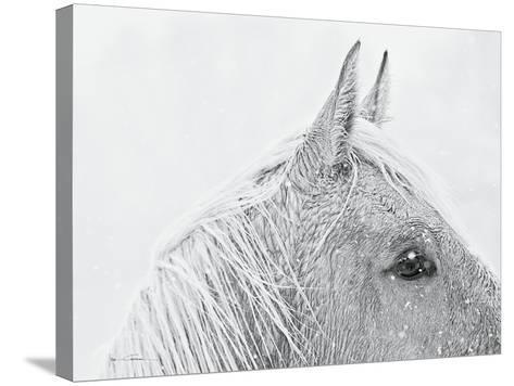 Snow Daze I Crop-Lisa Cueman-Stretched Canvas Print
