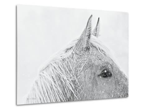 Snow Daze I Crop-Lisa Cueman-Metal Print