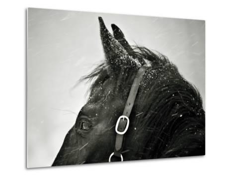 Snow Daze IV Crop-Lisa Cueman-Metal Print