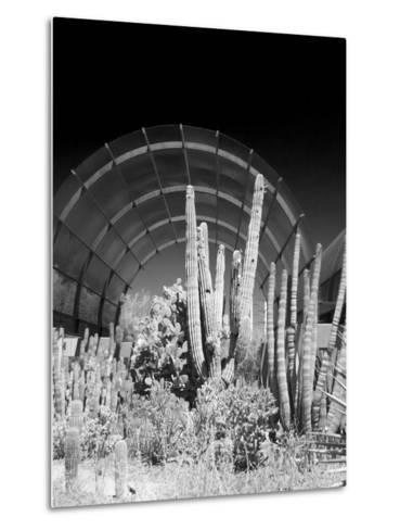 Phoenix Botanical Gardens, Arizona,USA-Anna Miller-Metal Print