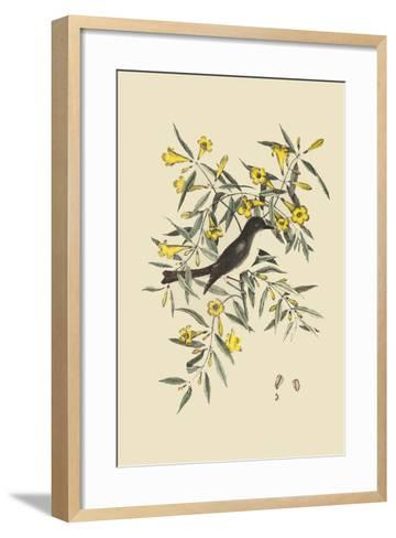 Blackcap Flycatcher-Mark Catesby-Framed Art Print