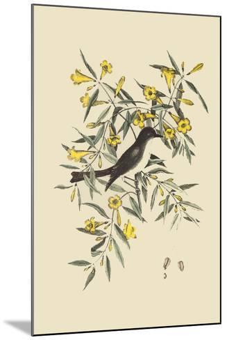 Blackcap Flycatcher-Mark Catesby-Mounted Art Print