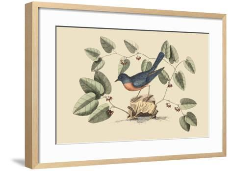 Blue Bird-Mark Catesby-Framed Art Print