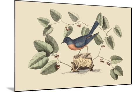 Blue Bird-Mark Catesby-Mounted Art Print
