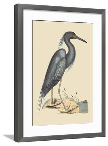 Blue Heron-Mark Catesby-Framed Art Print