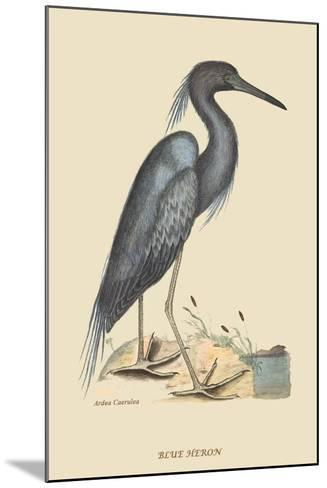Blue Heron-Mark Catesby-Mounted Art Print