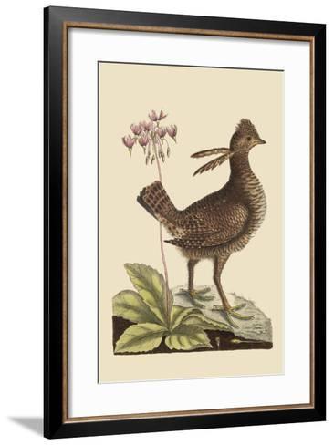 Amercan Partridge-Mark Catesby-Framed Art Print