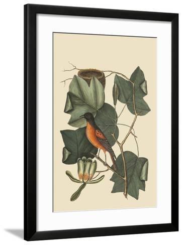 Baltimore Oriole-Mark Catesby-Framed Art Print