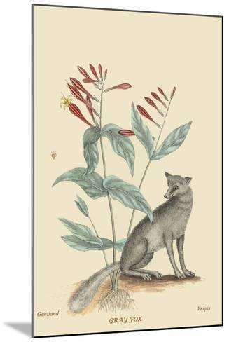 Gray Fox-Mark Catesby-Mounted Art Print