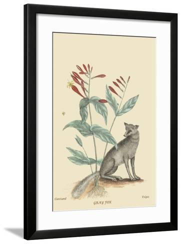 Gray Fox-Mark Catesby-Framed Art Print