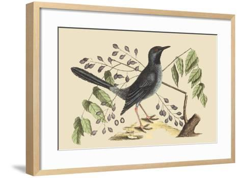Red Legged Thrush-Mark Catesby-Framed Art Print