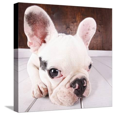 French Bulldog Puppy-MAIKA 777-Stretched Canvas Print