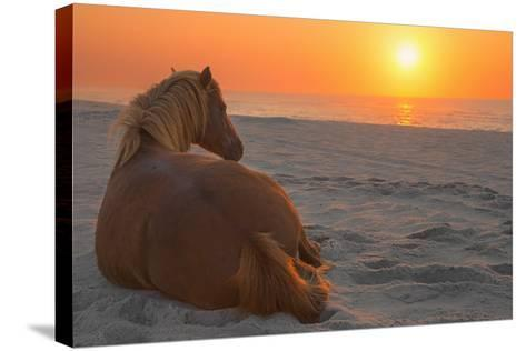 Wild Horse Sunrise-Image by Michael Rickard-Stretched Canvas Print