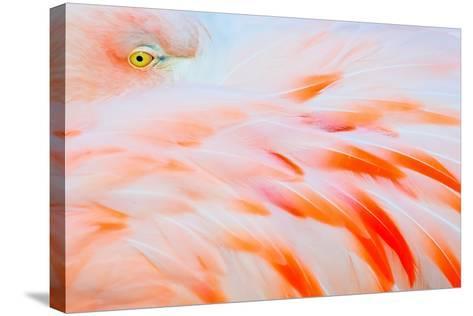 Flamingo-Tom Winstead-Stretched Canvas Print